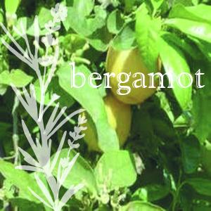 Citrus bergamia var. communis
