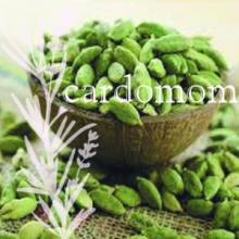 Elettaria cardomomum