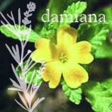 Turnera diffusa (var. aphrodisica)